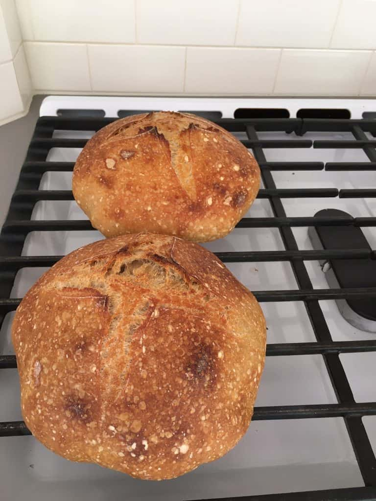 Two homemade loaves of sourdough bread